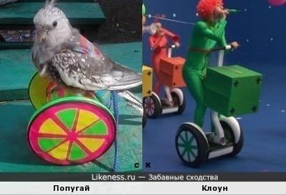 Попугай и Клоун