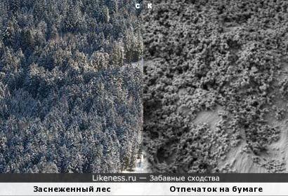 Заснеженный лес и Отпечаток на бумаге