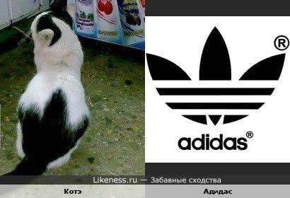 Чёткие коты носят адидас