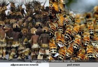 Расцветка штанов в одном африканском племени похожа на пчел