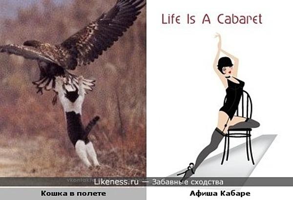 Кошка и Кабаре