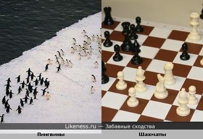 Шахматные пингвины