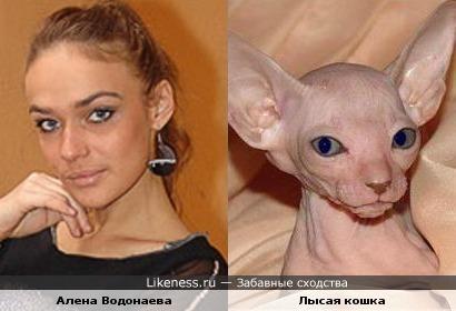 Что-то есть в ней от кошки)