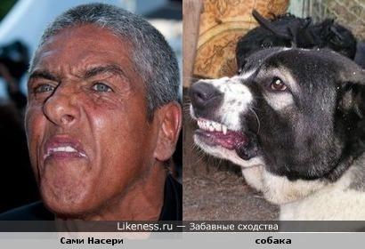 Насери - Собака