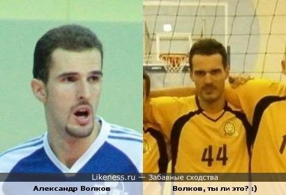 Волков волейболист
