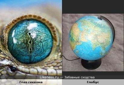 Глаз геккона напоминает глобус