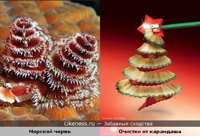 Морской червь напоминает очистки от карандаша