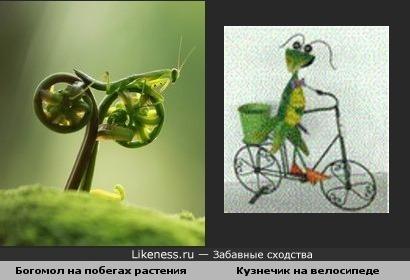 Насекомые на велосипеде