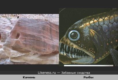 Камень напоминает рыбу