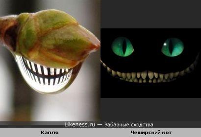 Капля напоминает челюсть чеширского кота