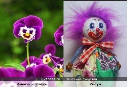 Анютины глазки - клоун