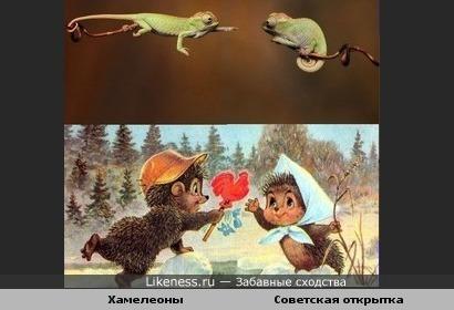Хамелеоны напомнили мне советскую открытку