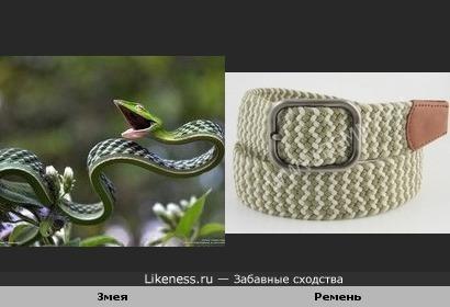 Зелёные плетевидные