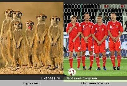 Сурикаты и футболисты сборной России