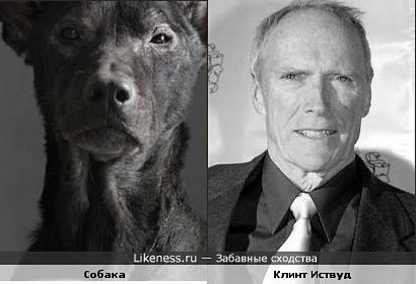 Собака копирует взгляд Клинта Иствуда