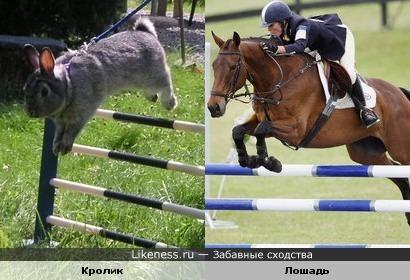 Кролик и лошадь одинаково прыгают через барьер :)))