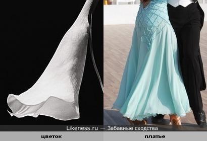 Цветок на фото Роберта Мэпплторпа похож на платье девушки, танцующей вальс