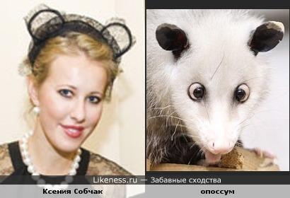 У Ксюшки и зверушки ушки на макушке )))