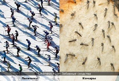 Много лыжников похожи на много комаров
