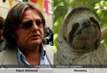 Юрий Антонов – ленивец