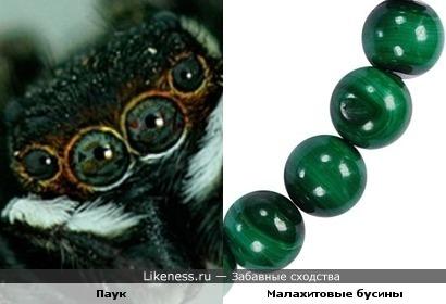 Глаза паука похожи на малахитовые бусины