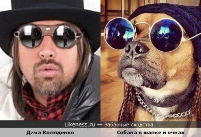 Собака в шапке и очках напомнила Диму Коляденко