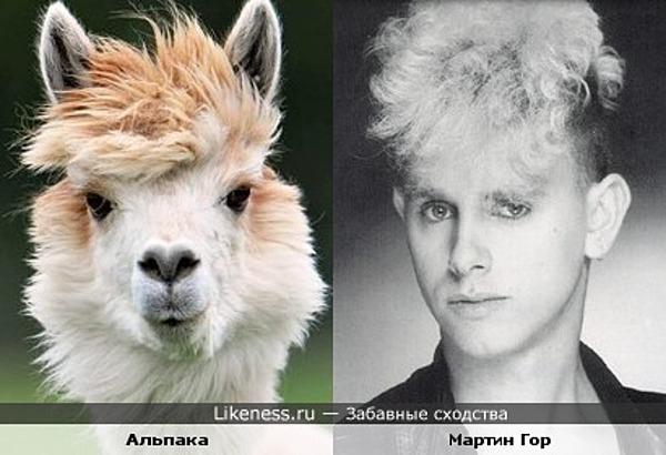 Альпака и Мартин Гор