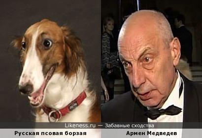 Русская псовая борзая и Армен Медведев