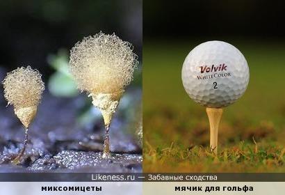 Миксомицеты напоминают мячик для гольфа