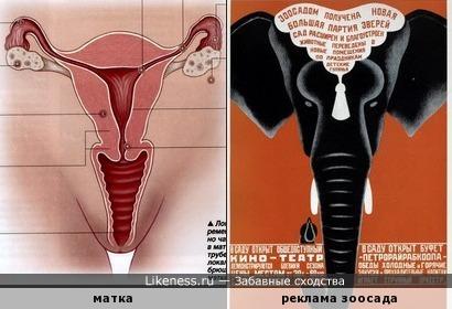 Реклама зоосада напоминает строение матки