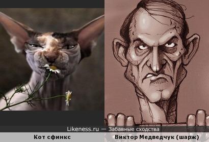 Виктор Медведчук на шарже (художник Юрий Журавель) похож на этого кота