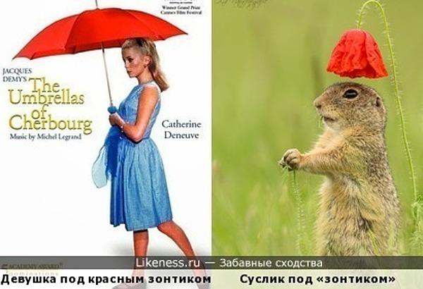 Красные зонтики
