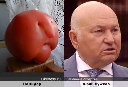 Помидор напомнил Юрия Лужкова