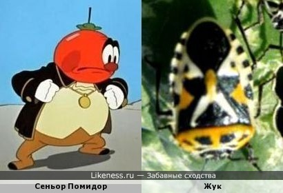 Рисунок на спине у жука напомнил Сеньора Помидора