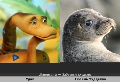 Тюлень Уэдделла напомнил Удава из м/ф «38 попугаев»