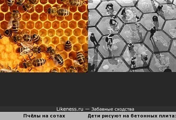 Дети, рисующие на бетонных плитах, напоминают пчёл на сотах