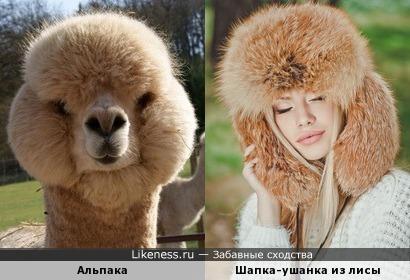 Девушки в модных шапках