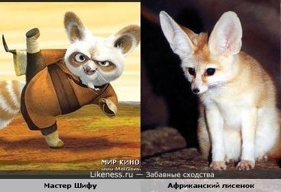 Мастер Шифу похож на Африканского лисенка (а не на малую панду :))