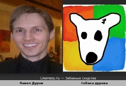 Павел дуров похож на собаку