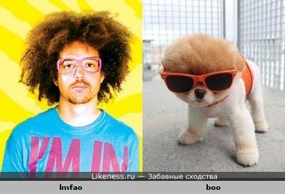 LMFAO похож на знаменитую собаку Boo