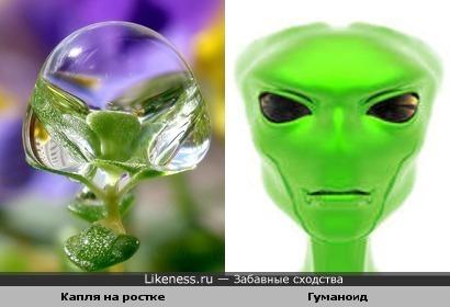 Капля росы напоминает инопланетянина