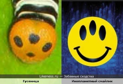 """Гусеница-2: физиономия гусеницы напоминает эмблему фильма """"Эволюция"""""""