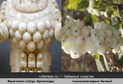 Статуя Артемиды Эфесской напомнила плоды снежноягодника)