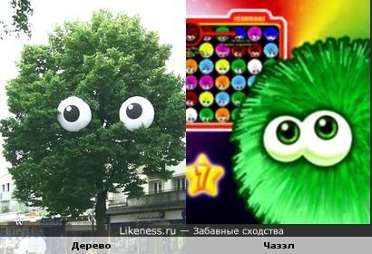 Глазастое дерево похоже на Чаззл