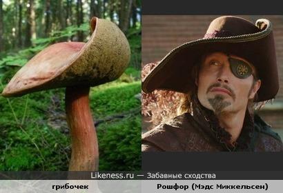 Конечно, многие грибы похожи на шляпы. Но этот - явно читал Дюма!
