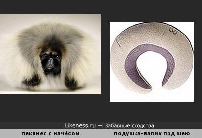 Собачка с подушкой... или собачка-подушка?