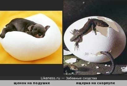 Чёрно-белое...