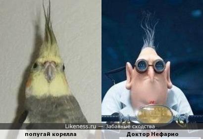 Хохолки и клювы )