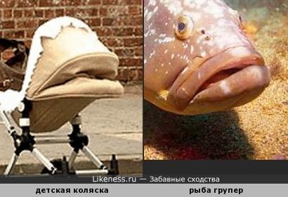 Детская коляска напоминает рыбу