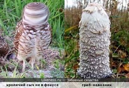 - Не крути головой, а не то в гриб превратишься! )